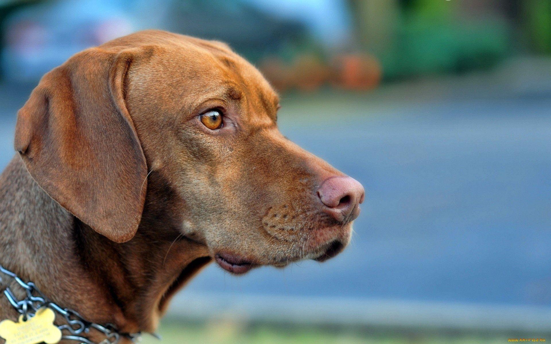 150214 скачать обои Животные, Собака, Морда, Профиль, Взгляд, Испуг - заставки и картинки бесплатно