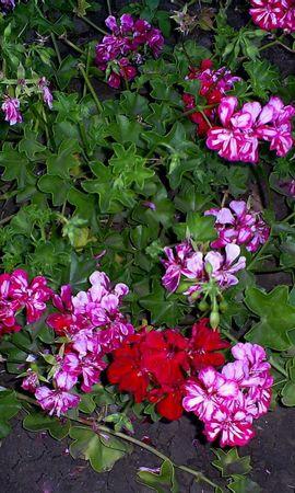 6845 скачать обои Растения, Цветы - заставки и картинки бесплатно