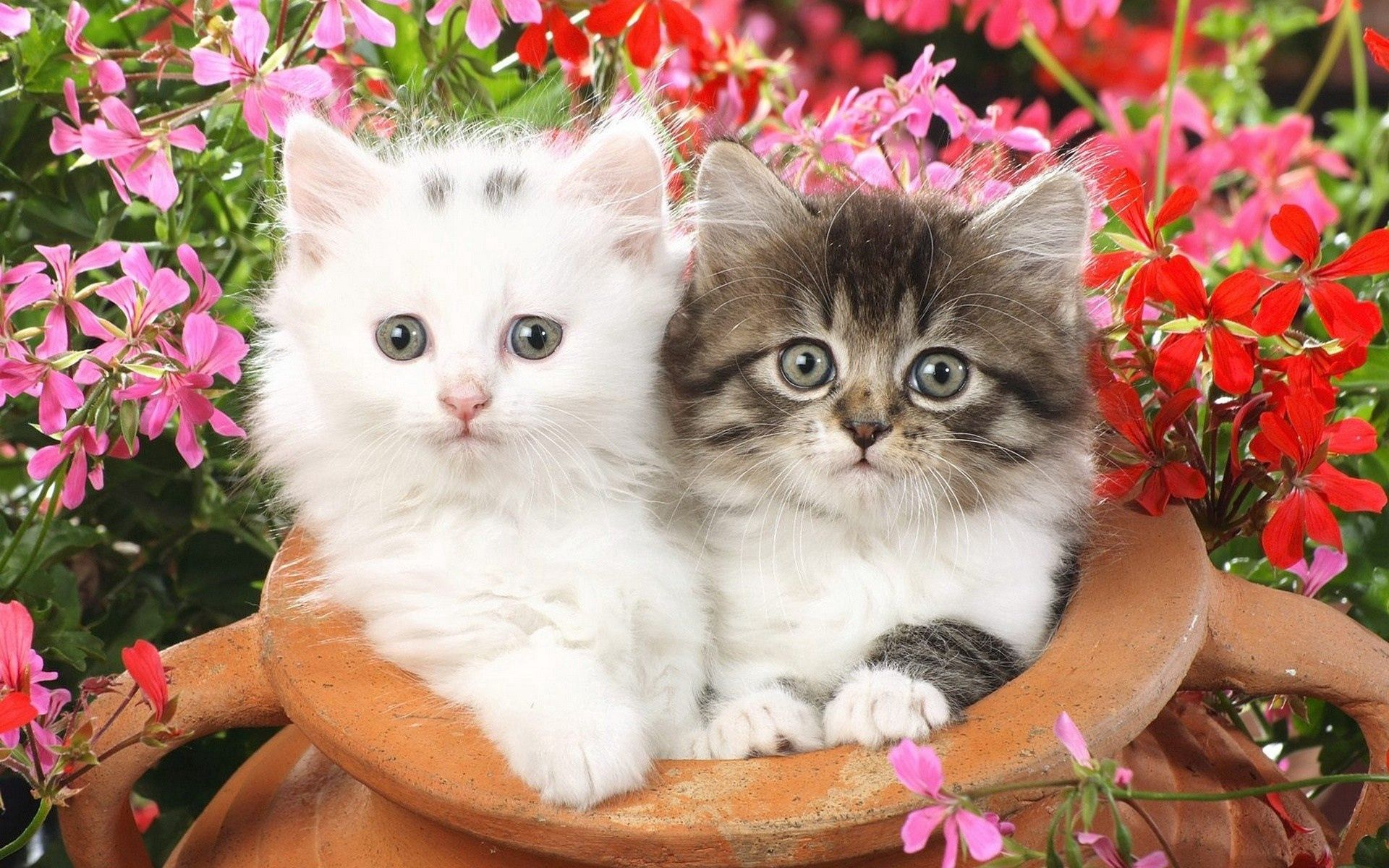 85647 Screensavers and Wallpapers Kittens for phone. Download Animals, Flowers, Fluffy, Couple, Pair, Spotted, Kittens pictures for free