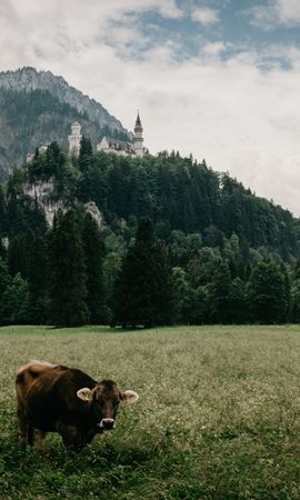 156506 download wallpaper Animals, Meadow, Bull, Lock, Grass, Bavaria, Mountains screensavers and pictures for free