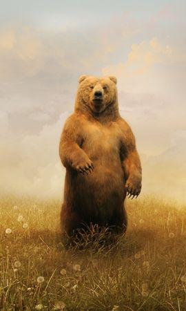 34049 baixar papel de parede Animais, Bears - protetores de tela e imagens gratuitamente