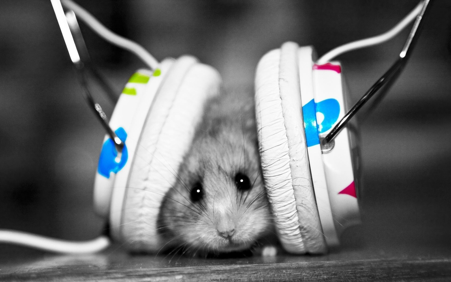 13242 download wallpaper Music, Animals, Hamsters screensavers and pictures for free