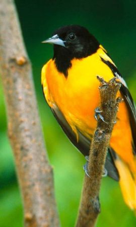 6939 download wallpaper Animals, Birds screensavers and pictures for free
