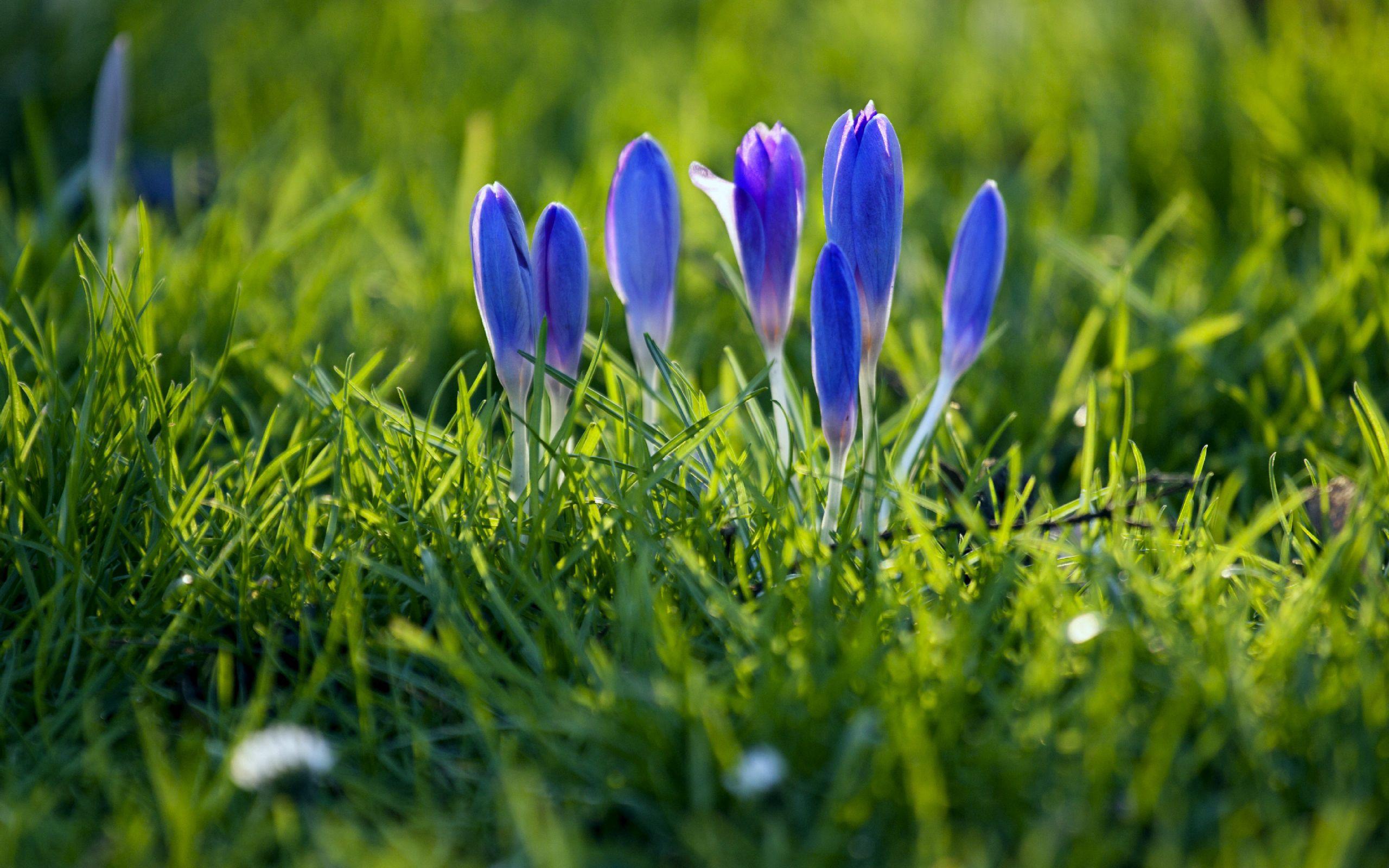 114463 Заставки и Обои Подснежники на телефон. Скачать Цветы, Подснежники, Растение, Весна картинки бесплатно
