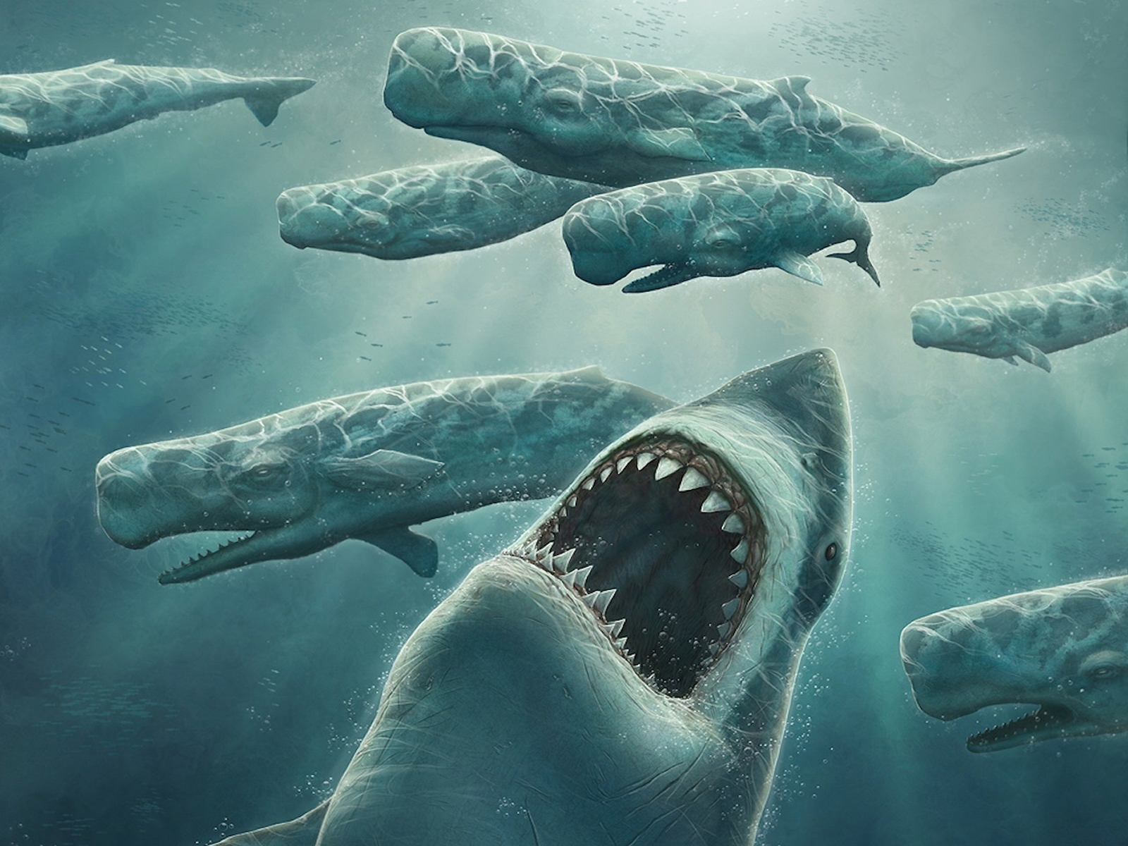 2739 download wallpaper Art, Sharks, Fishes, Pictures screensavers and pictures for free