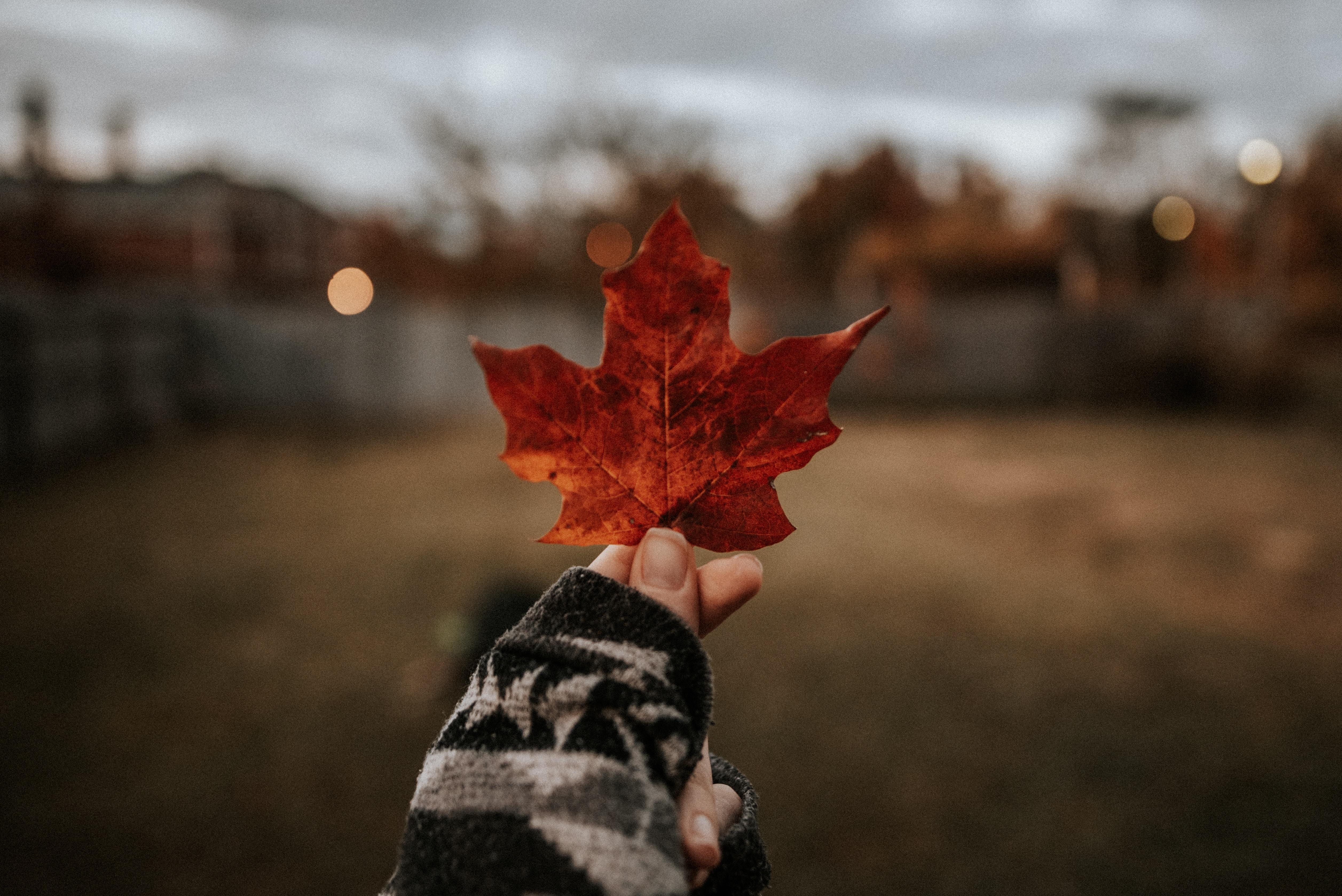 141363 download wallpaper Nature, Leaflet, Hand, Dry, Brown, Maple screensavers and pictures for free