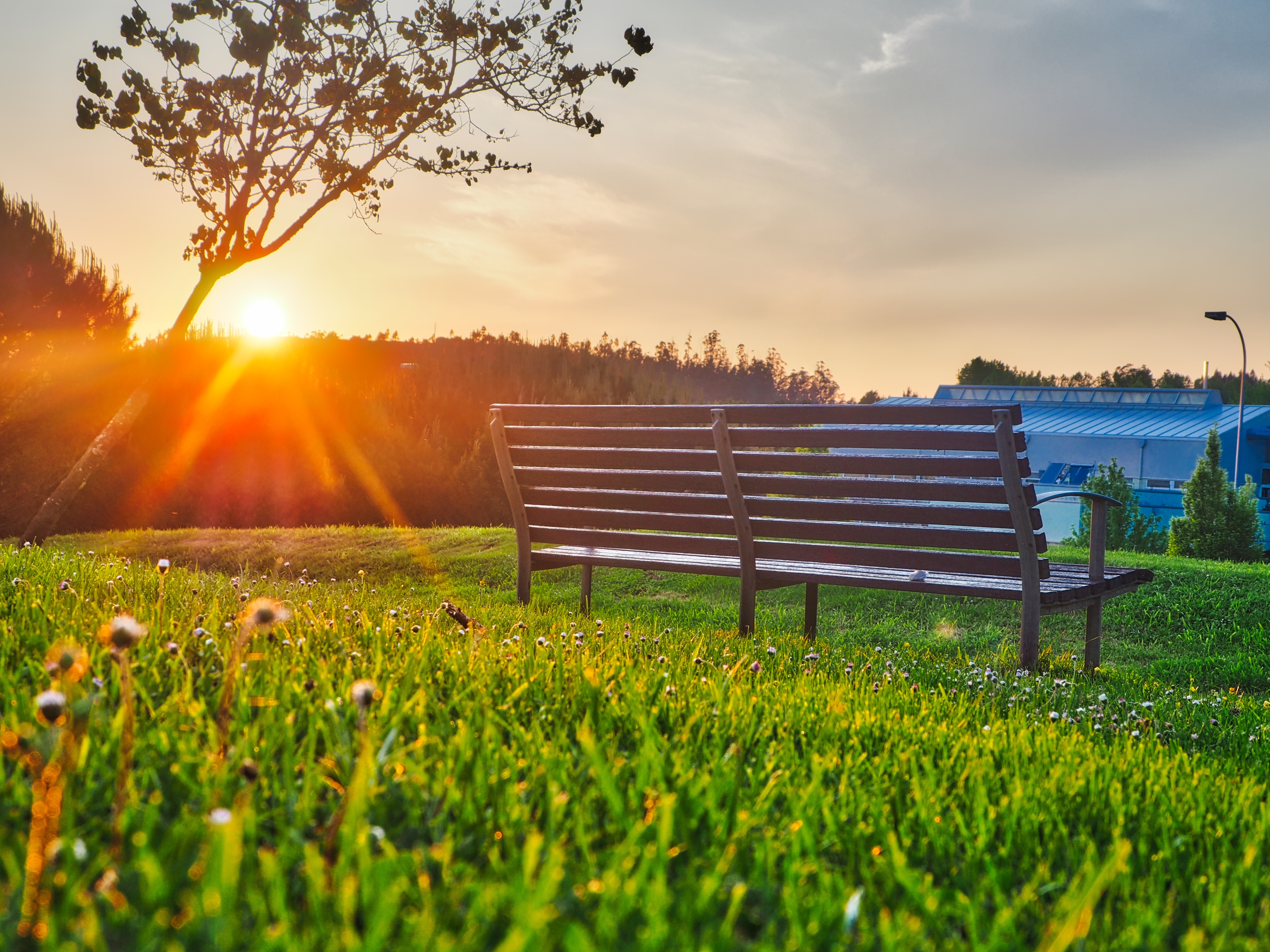 156659 Screensavers and Wallpapers Bench for phone. Download Bench, Sunlight, Nature, Summer, Park pictures for free