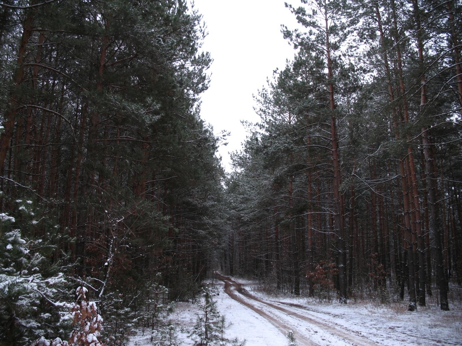 2069 скачать обои Растения, Пейзаж, Зима, Деревья, Дороги, Снег - заставки и картинки бесплатно