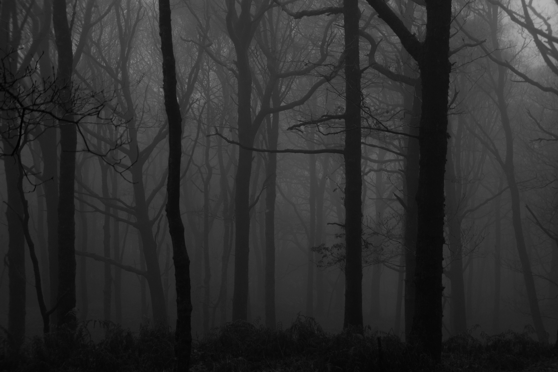 56266 Lade kostenlos Schwarz Hintergrundbilder für dein Handy herunter, Dunkel, Bäume, Wald, Nebel, Bw, Chb Schwarz Bilder und Bildschirmschoner für dein Handy