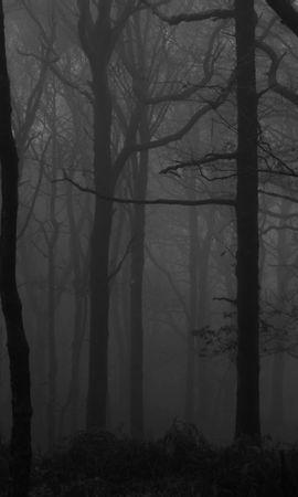 56266壁紙のダウンロード森林, 森, 霧, Bw, Chb, 木, 闇, 暗い-スクリーンセーバーと写真を無料で