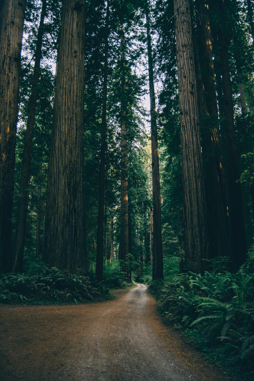 109076 скачать обои Деревья, Дорога, Зеленый, Лес, Природа, Ветки - заставки и картинки бесплатно