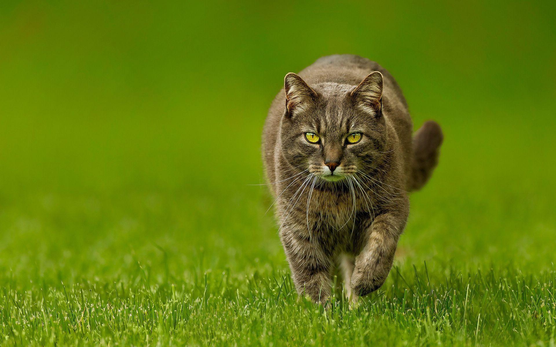 91520 скачать обои Природа, Животные, Зелень, Весна, Кот, Газон, Кошка - заставки и картинки бесплатно