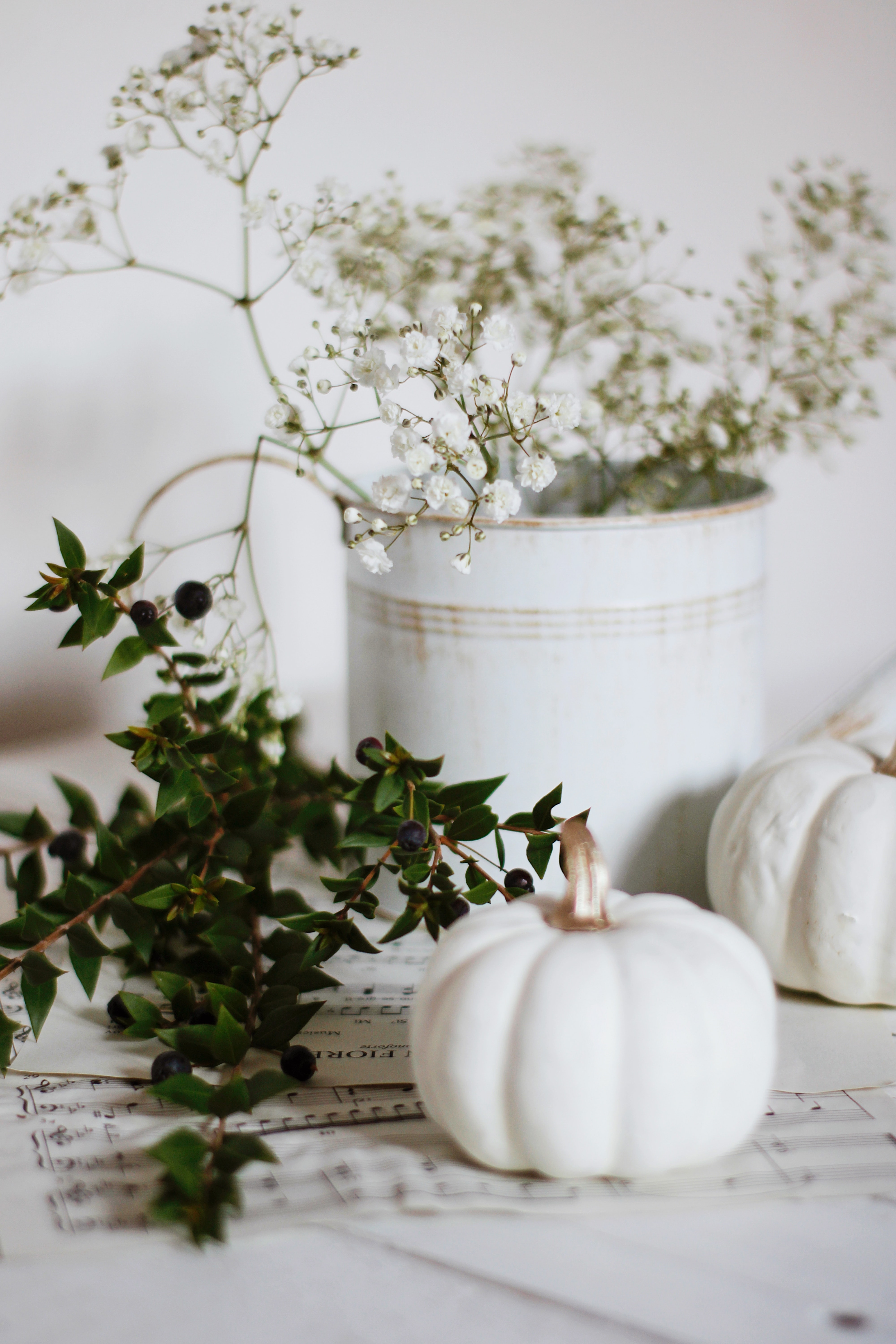 128181 download wallpaper Miscellanea, Miscellaneous, Pumpkin, Branch, Flowers, Berries screensavers and pictures for free