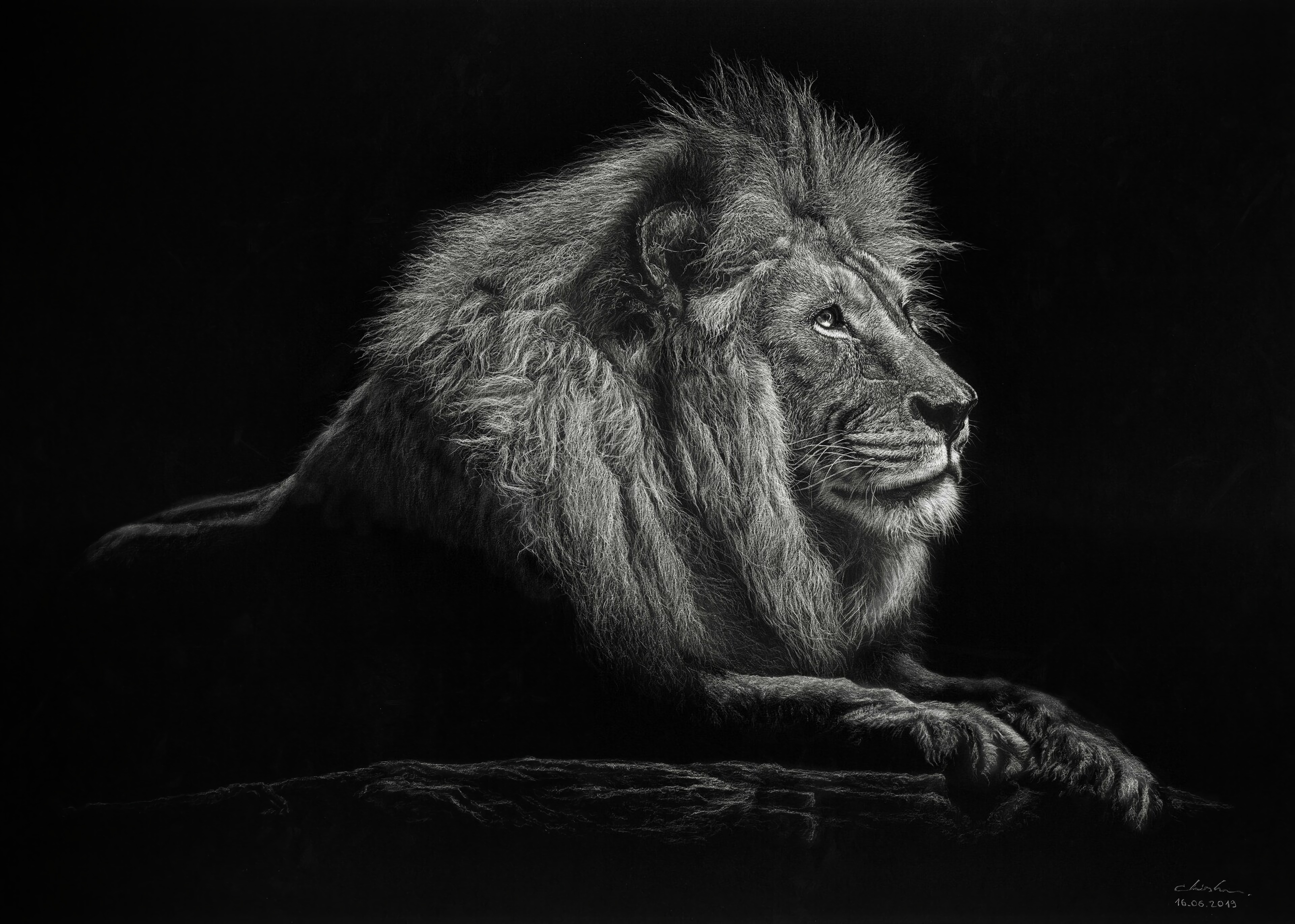 80635 Screensavers and Wallpapers Lion for phone. Download Lion, Art, Big Cat, Bw, Chb, Mane, King Of Beasts, King Of The Beasts pictures for free