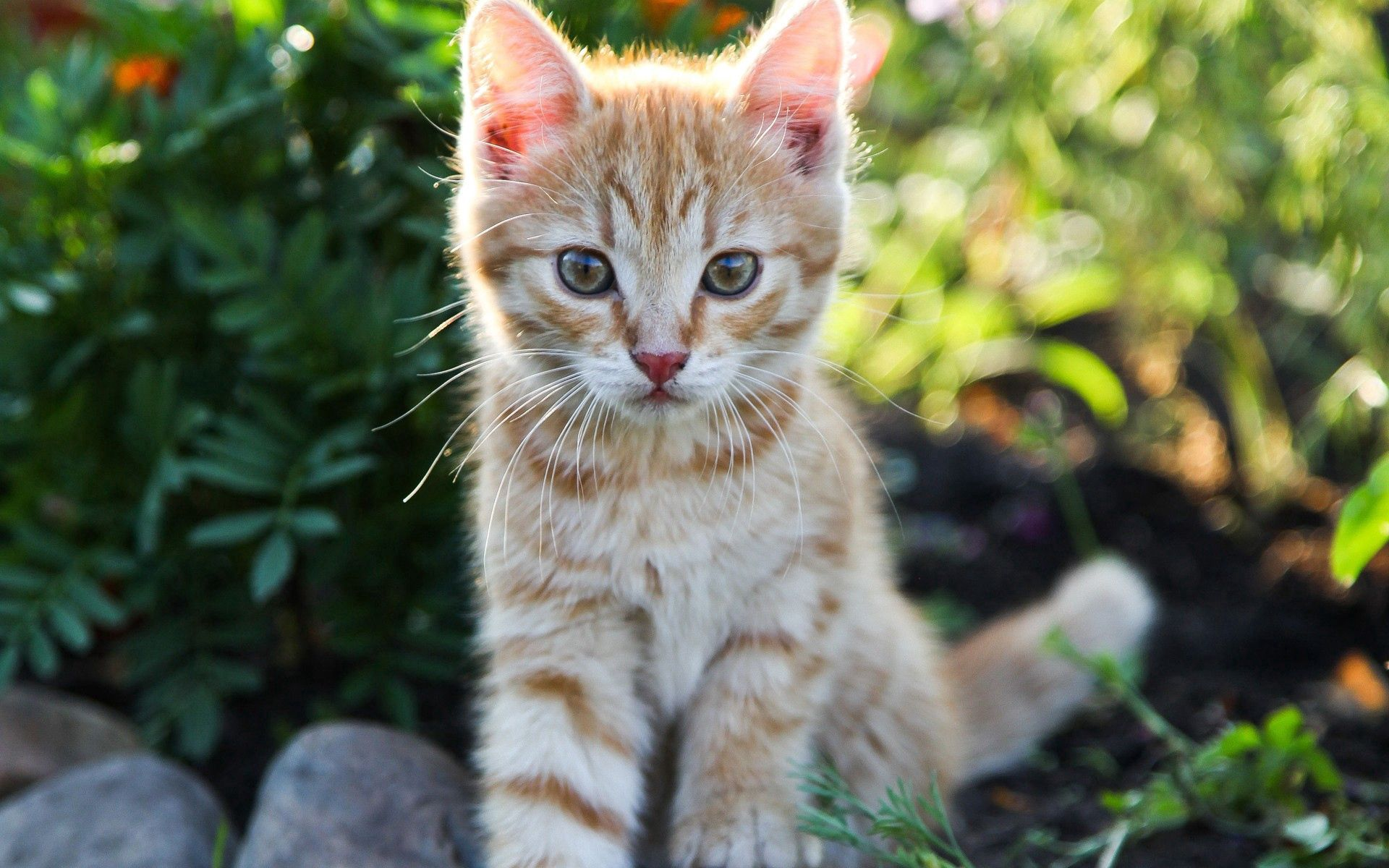 157696 download wallpaper Animals, Kitty, Kitten, Small, Nice, Sweetheart screensavers and pictures for free