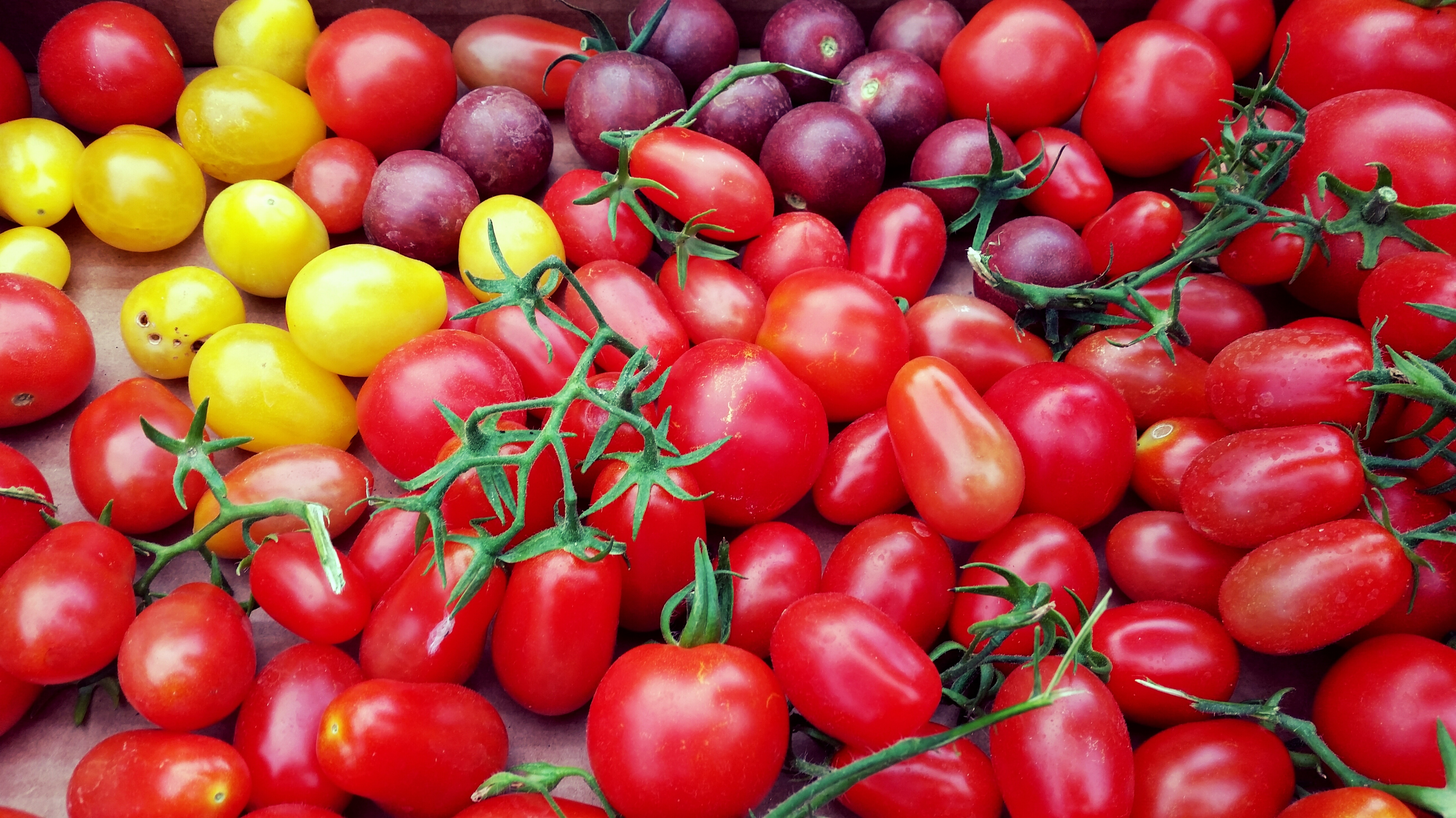 115453 download wallpaper Food, Cherry, Vegetables, Tomatoes, Variety, Varieties screensavers and pictures for free