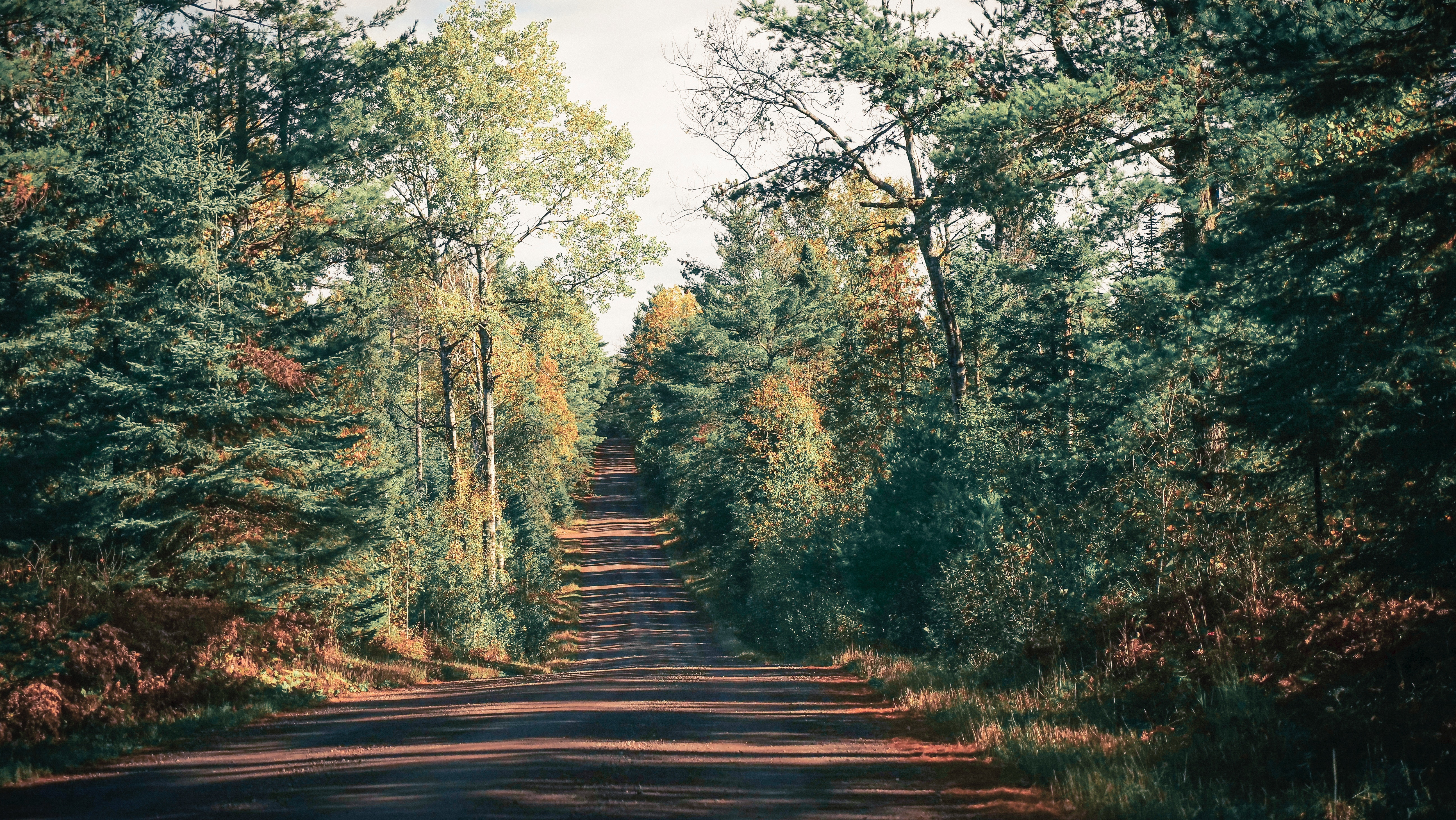 65445 Screensavers and Wallpapers Shadow for phone. Download Nature, Trees, Road, Shadow pictures for free