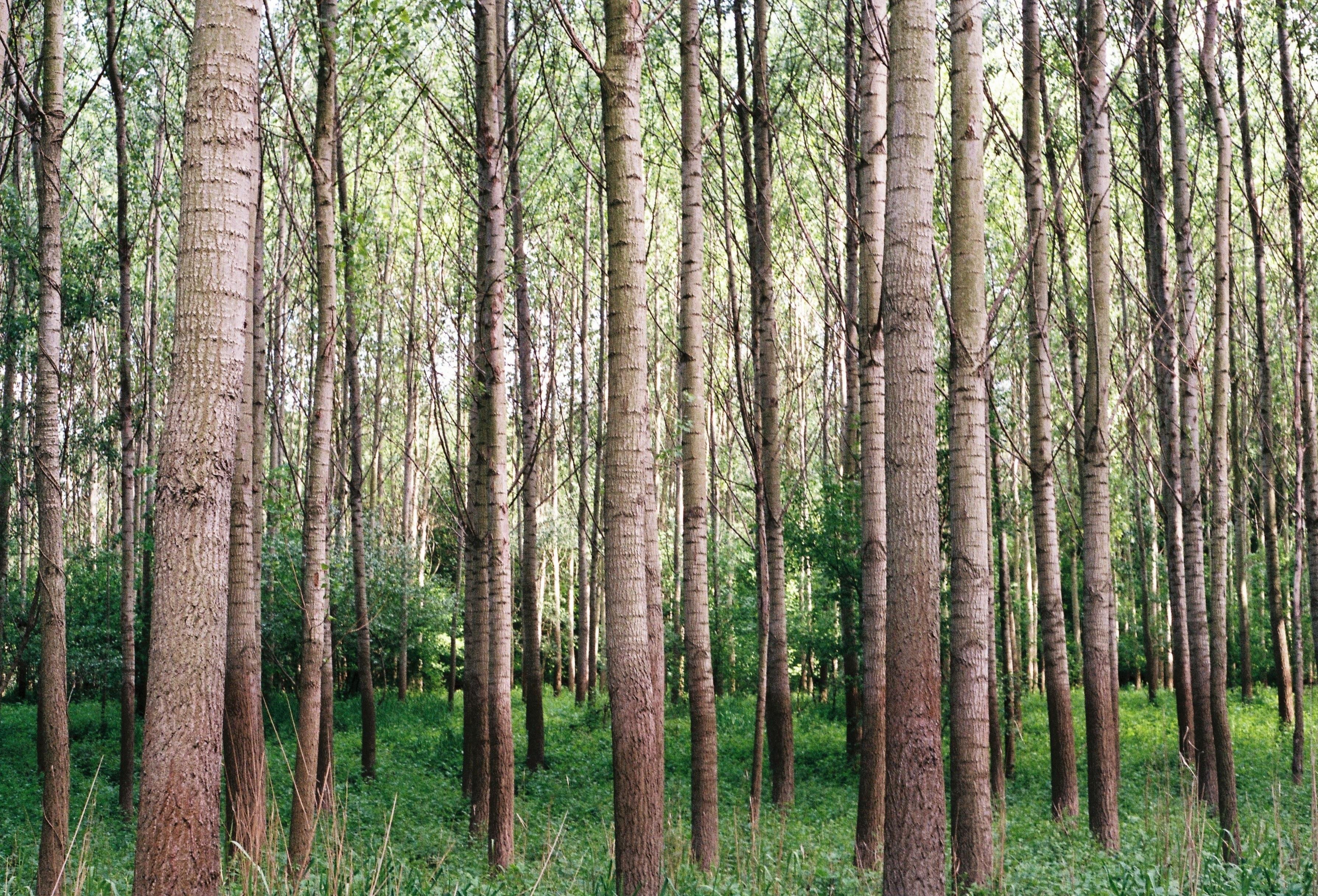 129627 Hintergrundbild 128x160 kostenlos auf deinem Handy, lade Bilder Natur, Bäume, Grass, Wald 128x160 auf dein Handy herunter