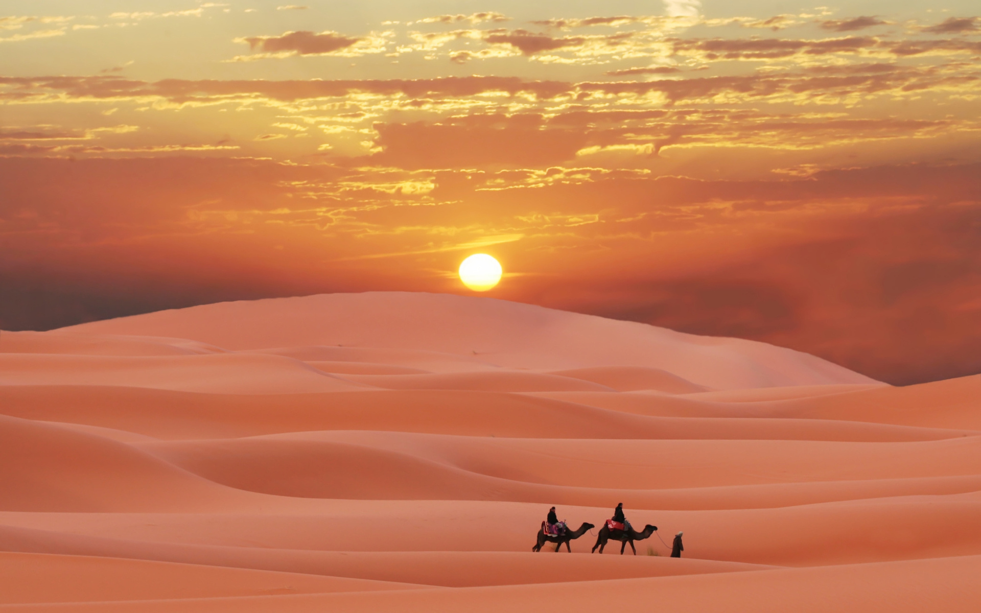 37568 download wallpaper Landscape, Desert, Camels screensavers and pictures for free