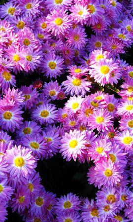 4786 скачать обои Растения, Цветы, Фон - заставки и картинки бесплатно