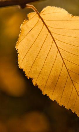 25047 скачать обои Растения, Деревья, Осень, Листья - заставки и картинки бесплатно