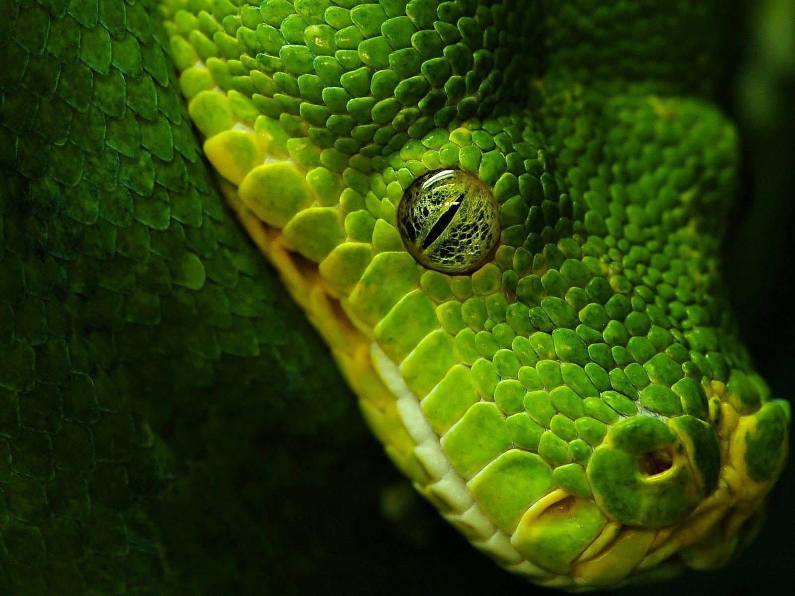 5293 скачать обои Животные, Змеи - заставки и картинки бесплатно