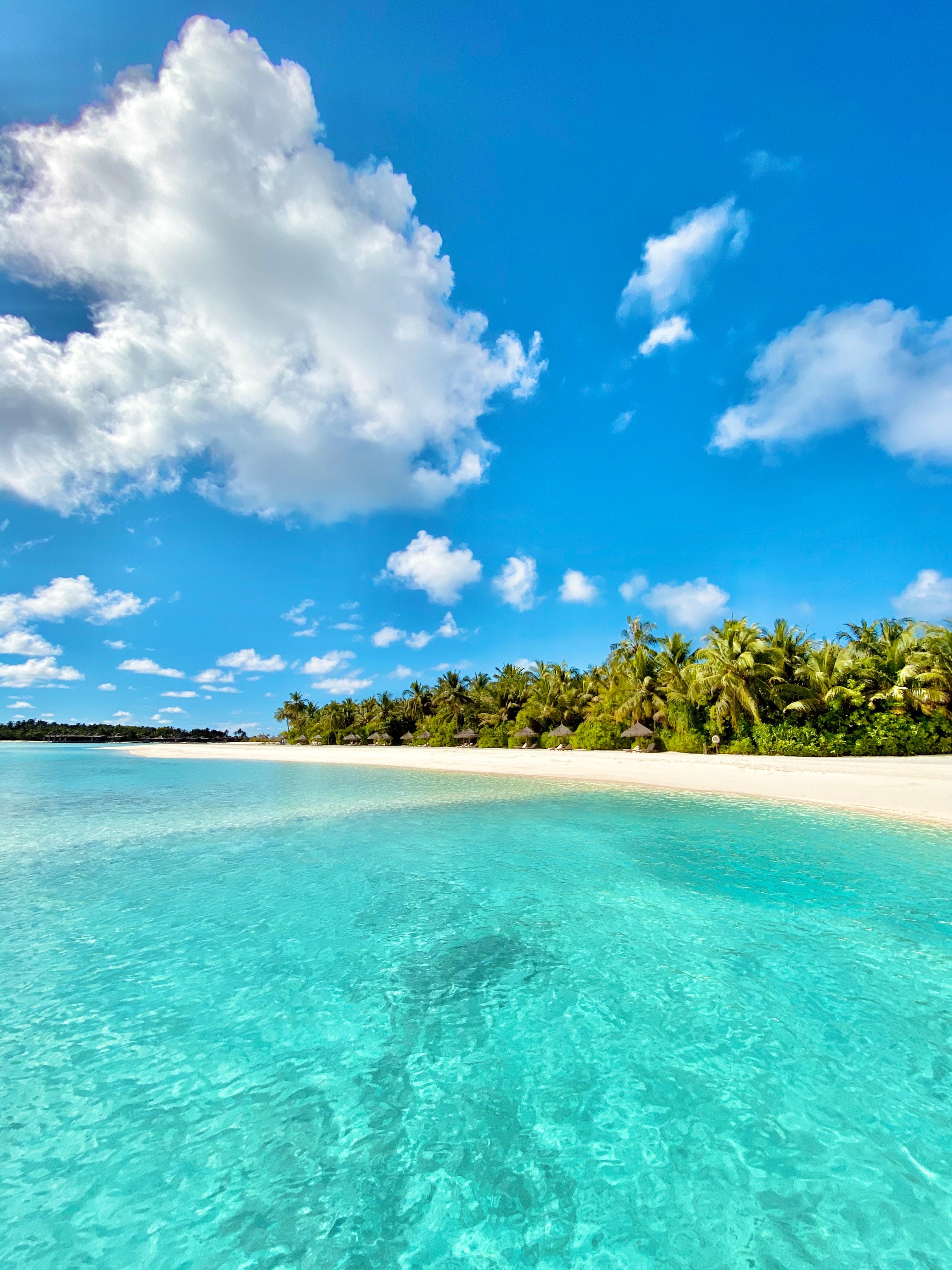 147127 скачать обои Пляж, Пальмы, Природа, Море, Лето, Тропики - заставки и картинки бесплатно