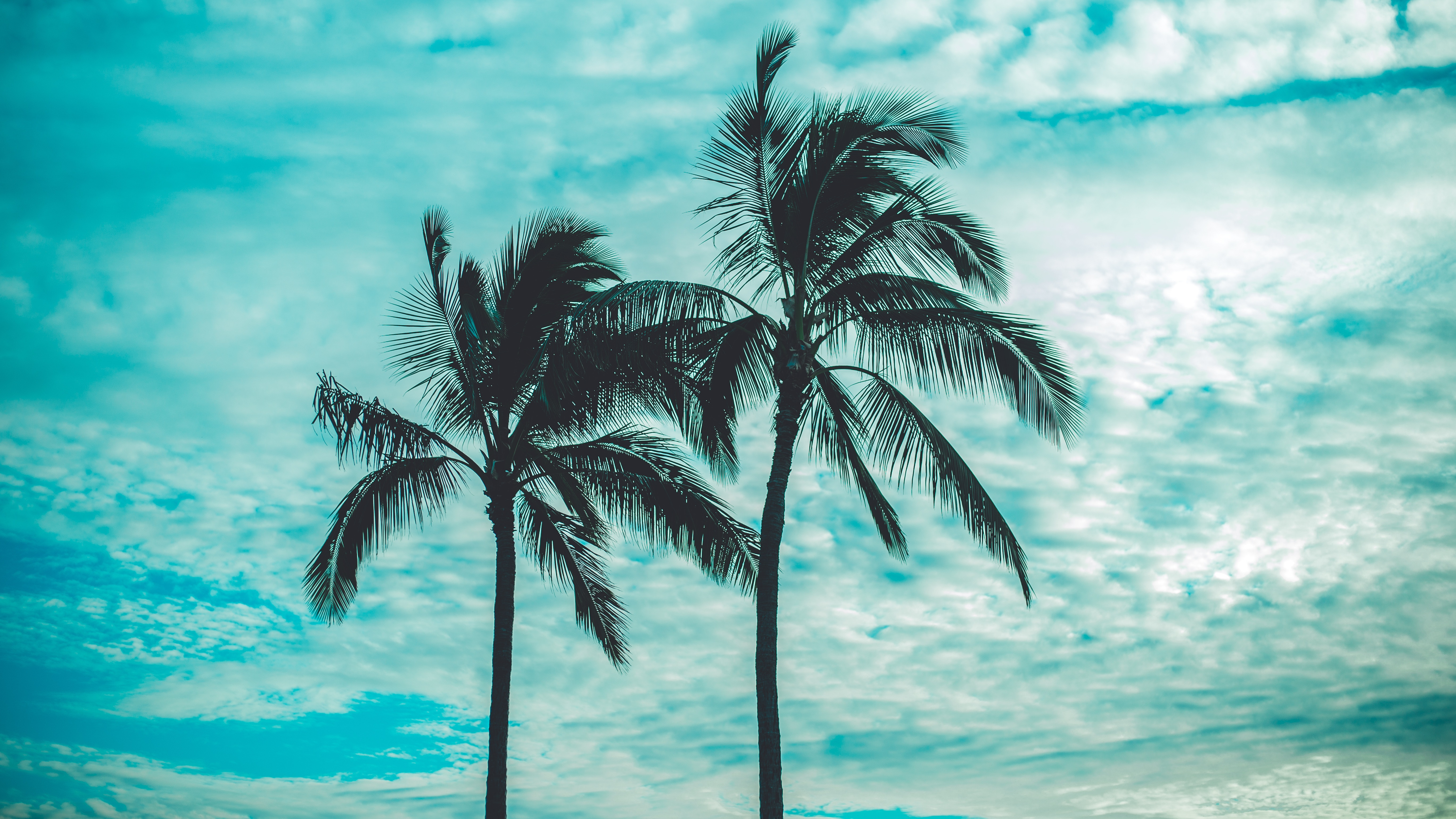 156286 download wallpaper Nature, Tops, Top, Sky, Clouds, Trees, Tropics, Palms screensavers and pictures for free