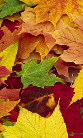 8088 скачать обои Растения, Осень, Листья - заставки и картинки бесплатно