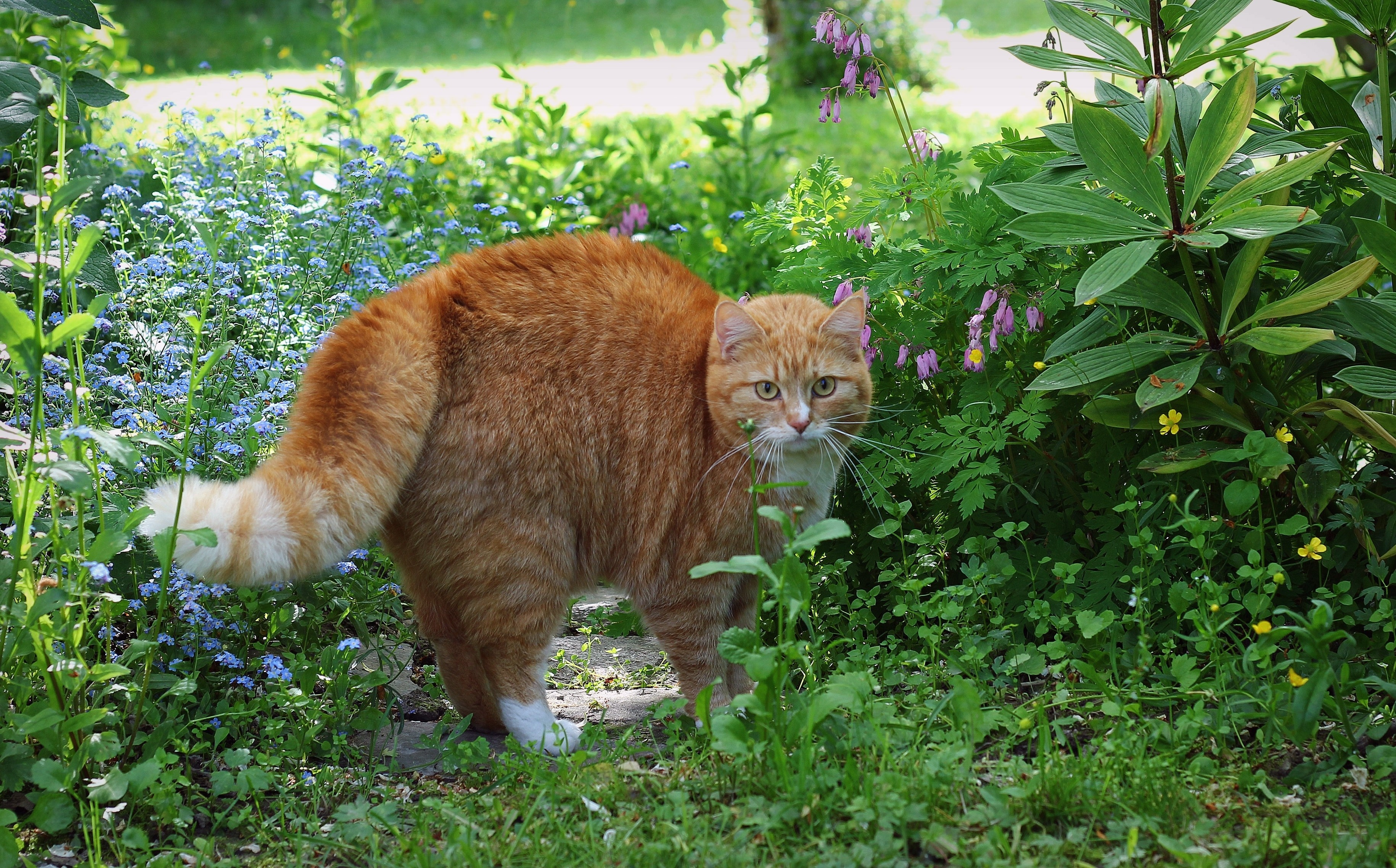 61427 download wallpaper Animals, Cat, Redhead, Striped, Grass screensavers and pictures for free