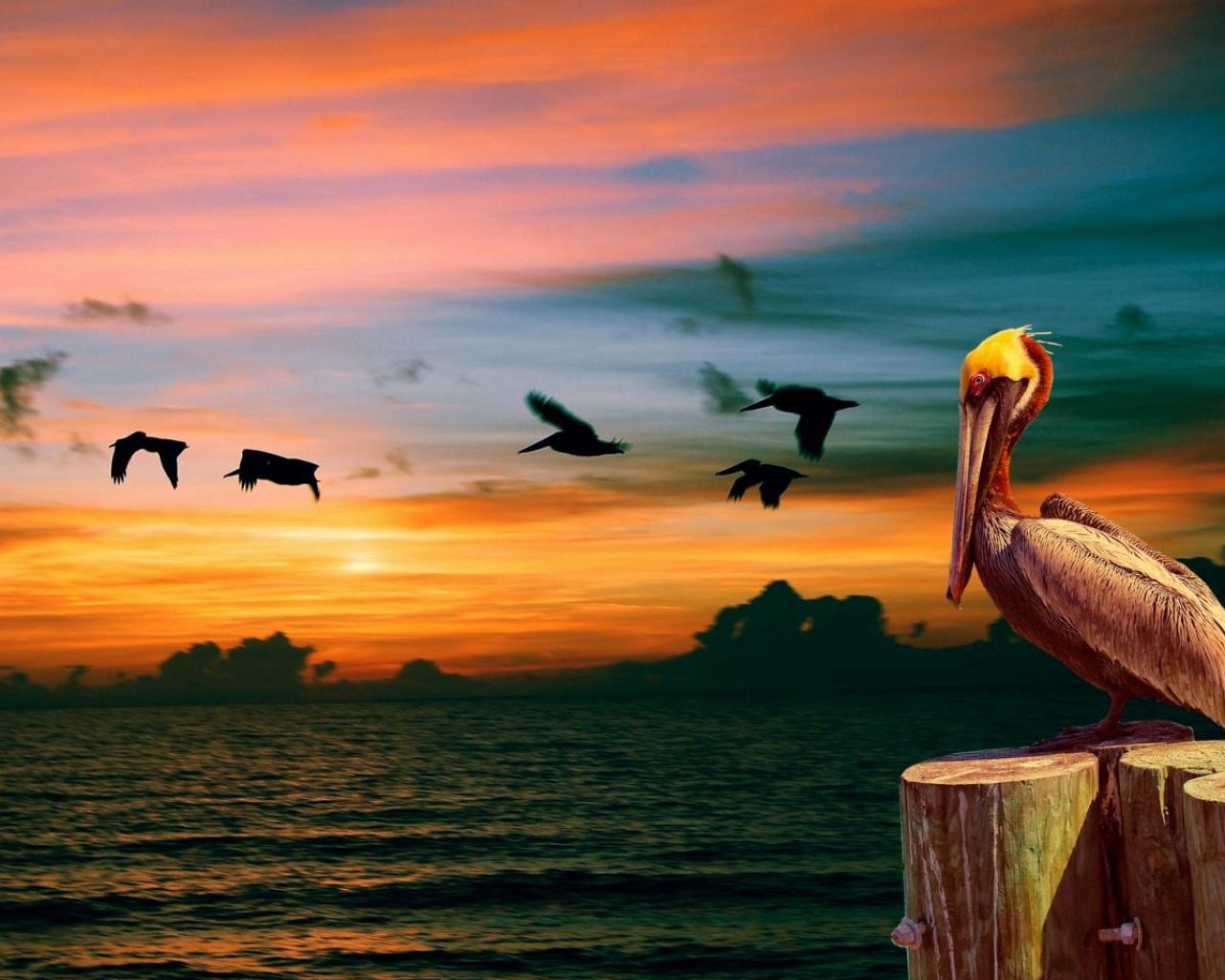 88307 download wallpaper Animals, Nature, Pelican, Sunset, Birds screensavers and pictures for free