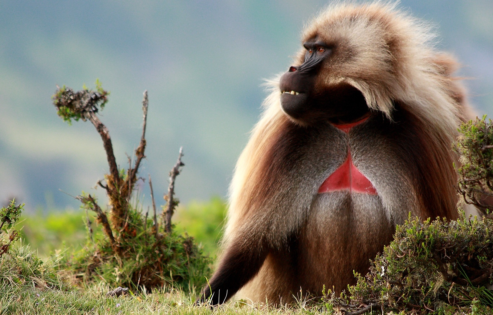 29803 Screensavers and Wallpapers Monkeys for phone. Download Animals, Monkeys pictures for free