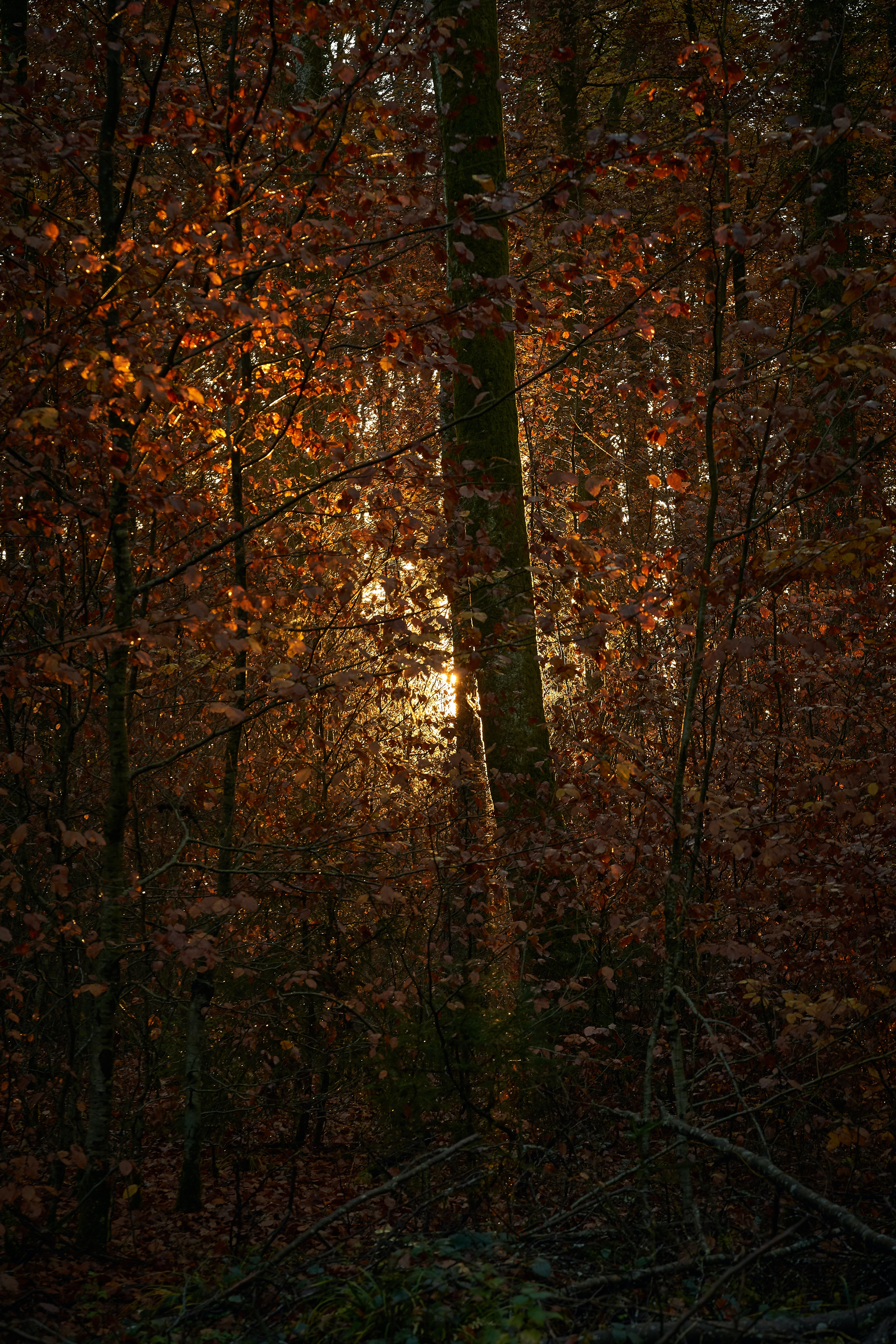 114280 download wallpaper Nature, Forest, Trees, Branches, Leaves, Shine, Light, Sun screensavers and pictures for free
