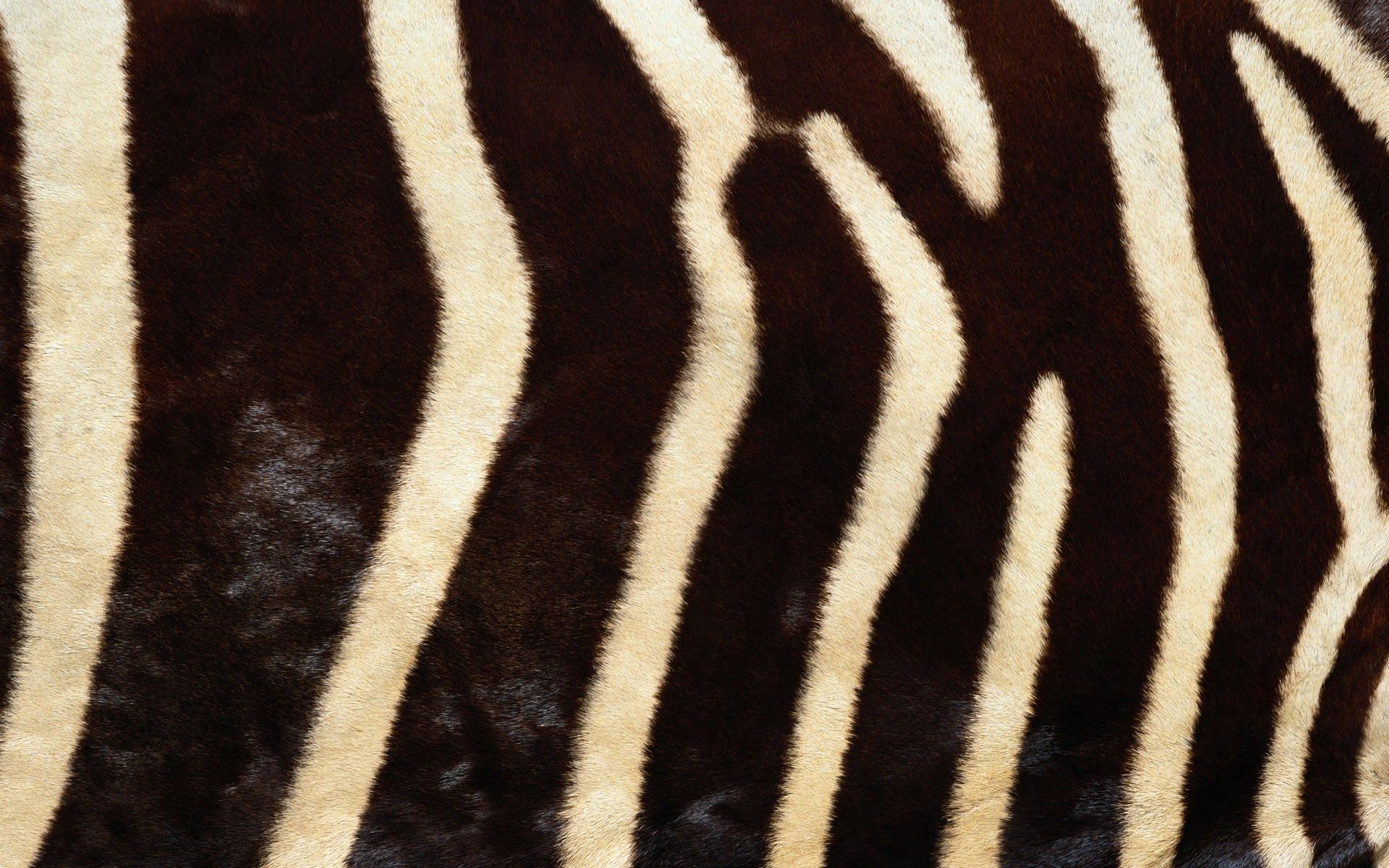 81884 download wallpaper Textures, Texture, Zebra, Fur, Stripes, Streaks, Lines screensavers and pictures for free