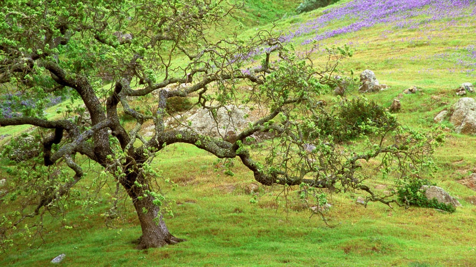 46735 скачать обои Пейзаж, Природа, Деревья - заставки и картинки бесплатно
