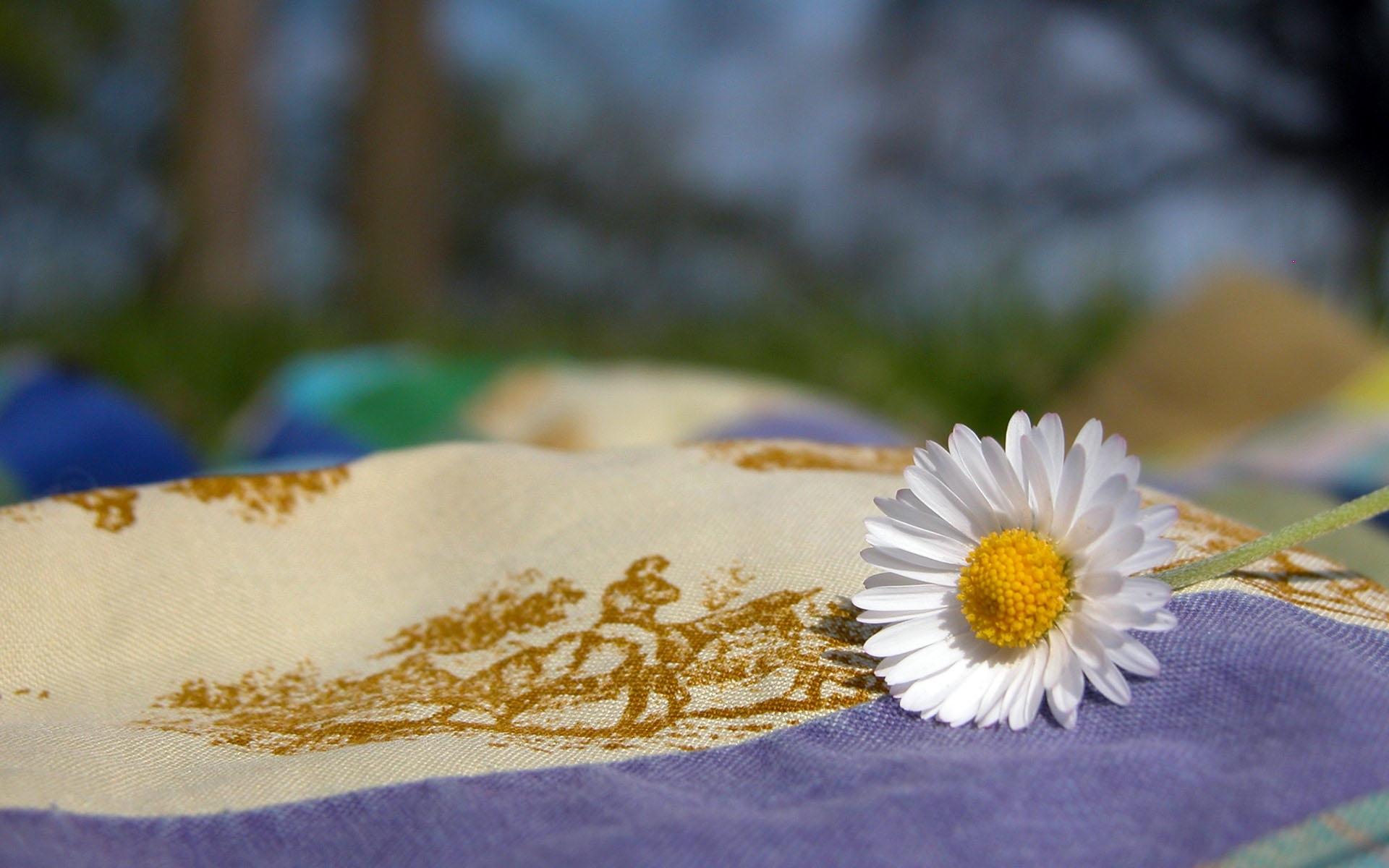 6379 скачать обои Растения, Цветы, Ромашки - заставки и картинки бесплатно