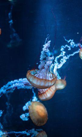 118634壁紙のダウンロード動物, 触手, 水中の世界, 水中ワールド, 海, クラゲ-スクリーンセーバーと写真を無料で