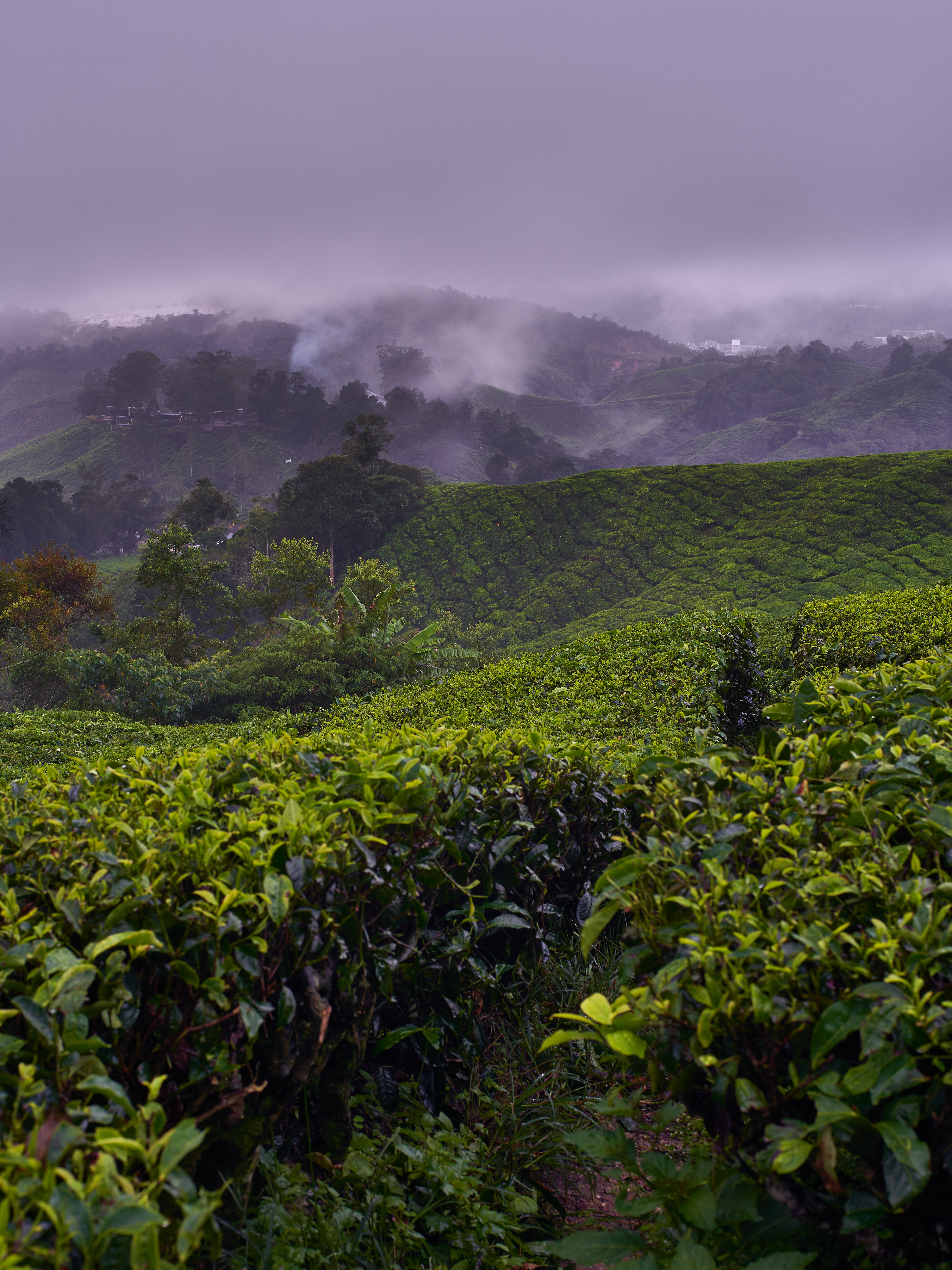 74464 download wallpaper Nature, Bush, Fog, Hills, Plantation screensavers and pictures for free