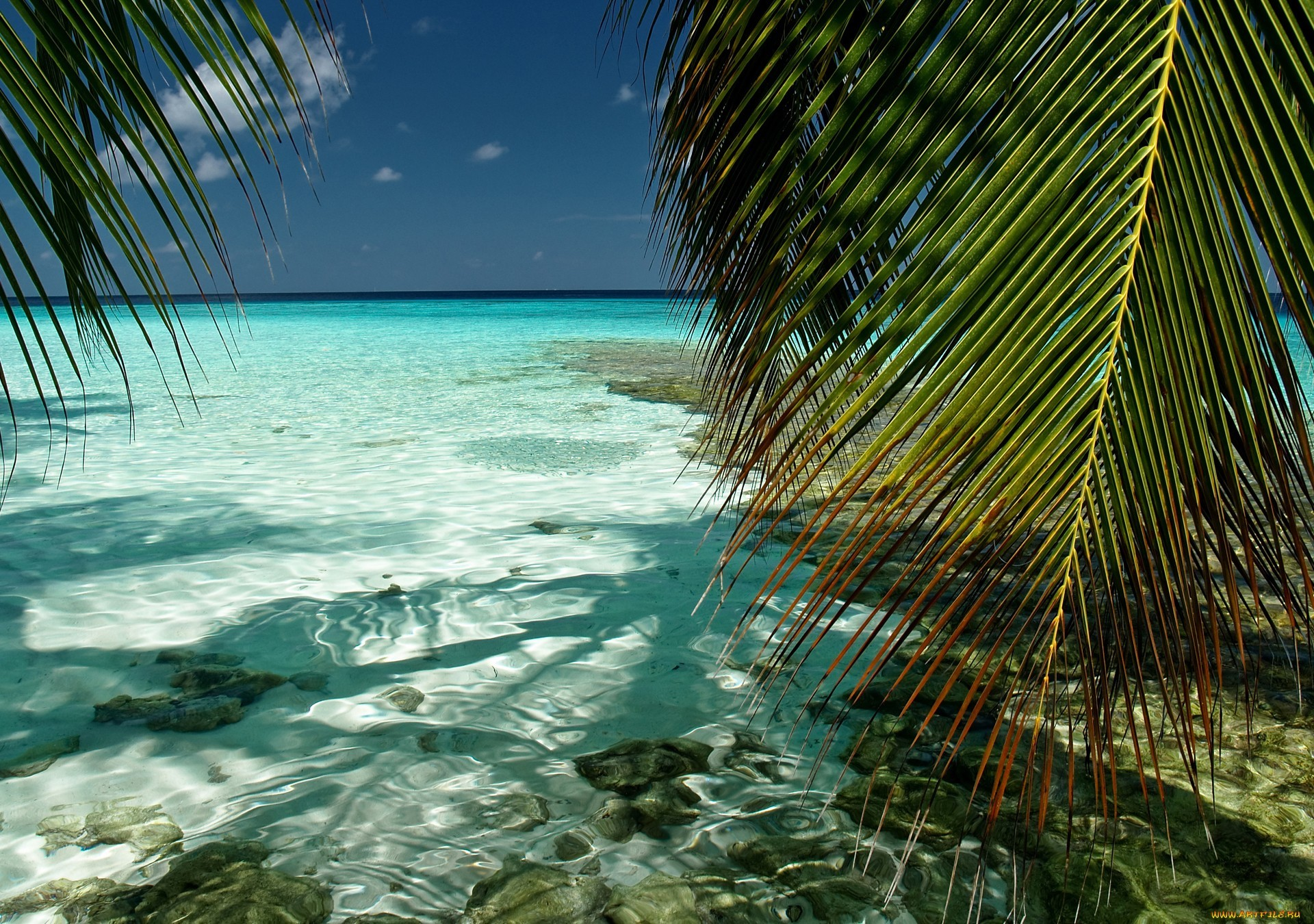 21850 download wallpaper Landscape, Sea, Beach, Palms screensavers and pictures for free