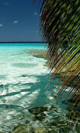 21850 скачать обои Пейзаж, Море, Пляж, Пальмы - заставки и картинки бесплатно