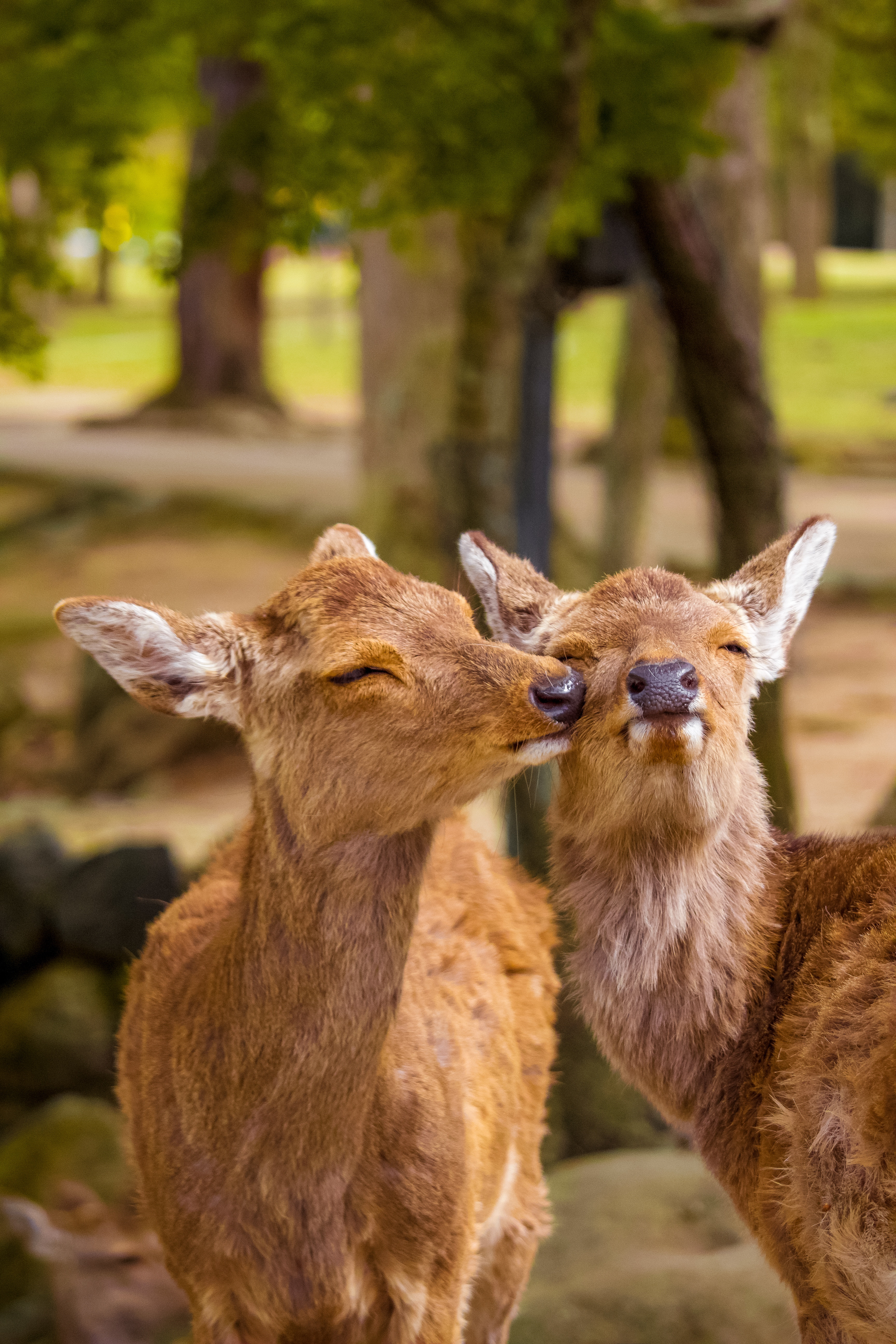 81193 download wallpaper Animals, Deers, Nice, Sweetheart, Funny, Wildlife screensavers and pictures for free