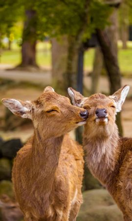 81193 Screensavers and Wallpapers Funny for phone. Download Animals, Deers, Nice, Sweetheart, Funny, Wildlife pictures for free