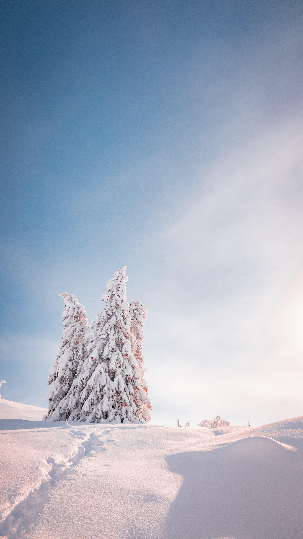 93273 скачать обои Природа, Деревья, Снег, Свет, Зима, Елки - заставки и картинки бесплатно