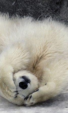 34315 baixar papel de parede Animais, Bears - protetores de tela e imagens gratuitamente