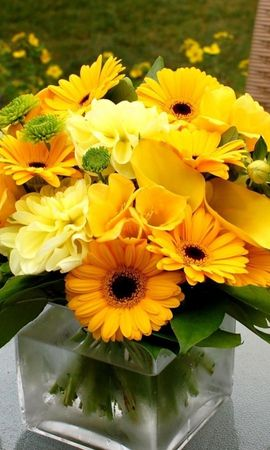 17068 download wallpaper Plants, Flowers, Sunflowers, Still Life screensavers and pictures for free