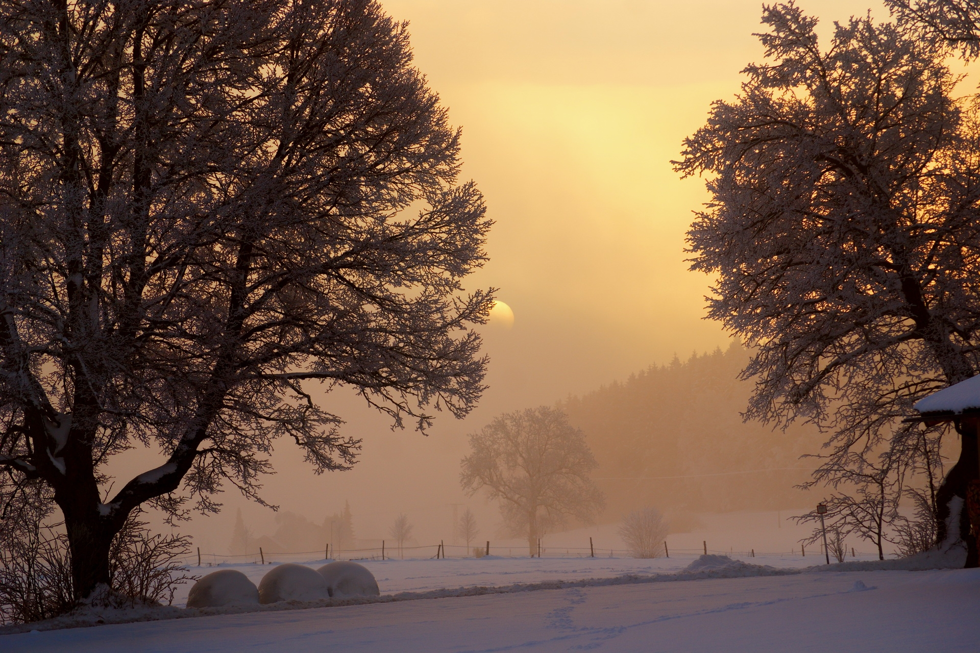 145376 download wallpaper Nature, Dawn, Winter, Sky, Lumen, Opening, Morning, Trees, Snow, Fog, Frost, Courtyard, Yard, Sun screensavers and pictures for free