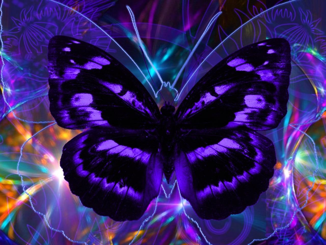 44149 descargar fondo de pantalla Mariposas, Insectos: protectores de pantalla e imágenes gratis