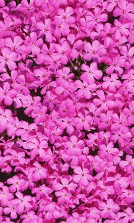 8695 скачать обои Растения, Цветы, Фон - заставки и картинки бесплатно