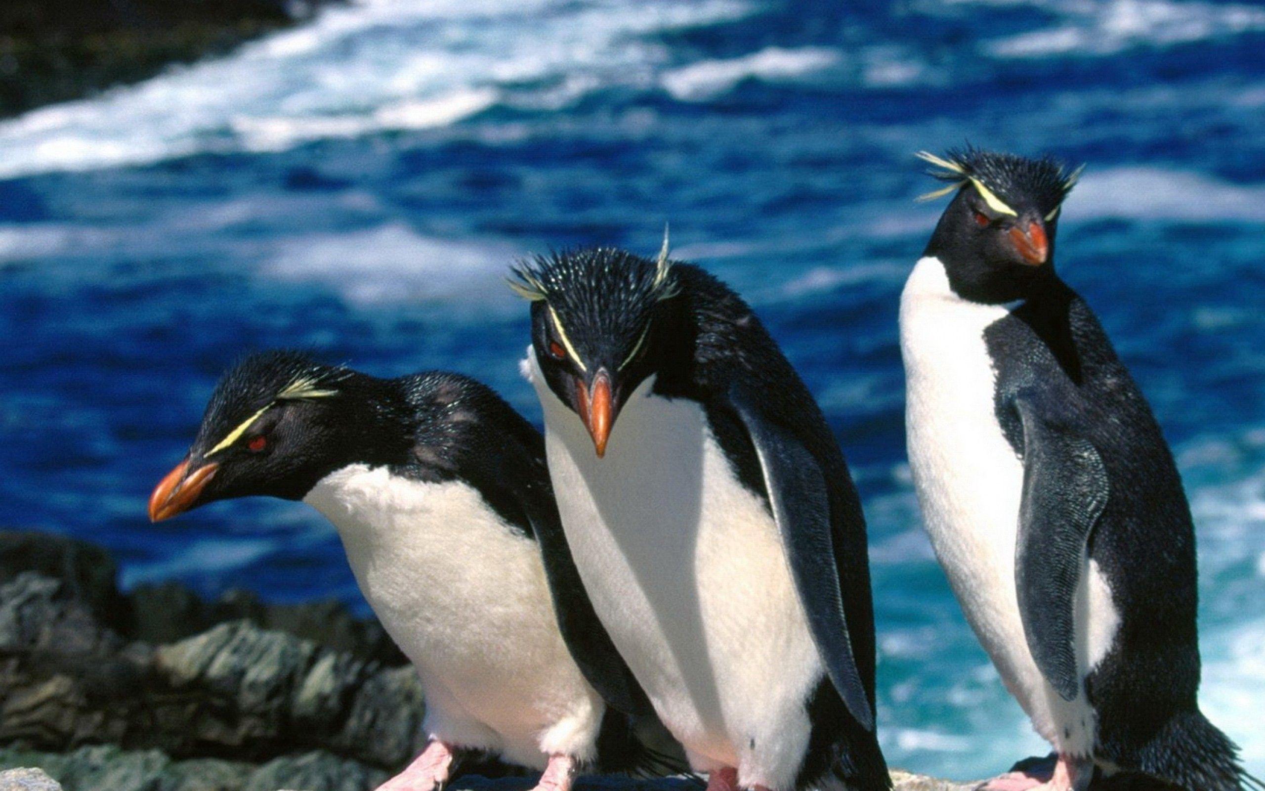 138708 Hintergrundbild 1024x600 kostenlos auf deinem Handy, lade Bilder Tiere, Wasser, Pinguins, Bummel, Spaziergang, Drei 1024x600 auf dein Handy herunter