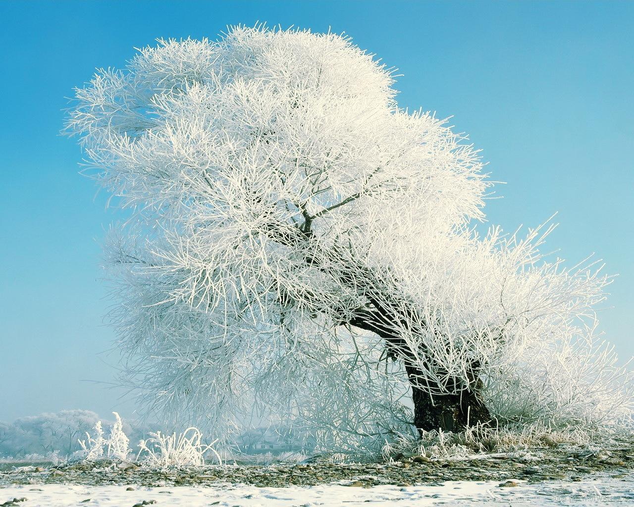 13833 descargar fondo de pantalla Paisaje, Invierno, Árboles, Nieve: protectores de pantalla e imágenes gratis